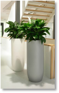 Indoor plants or tropical plants for offices - Interior plant maintenance contract ...